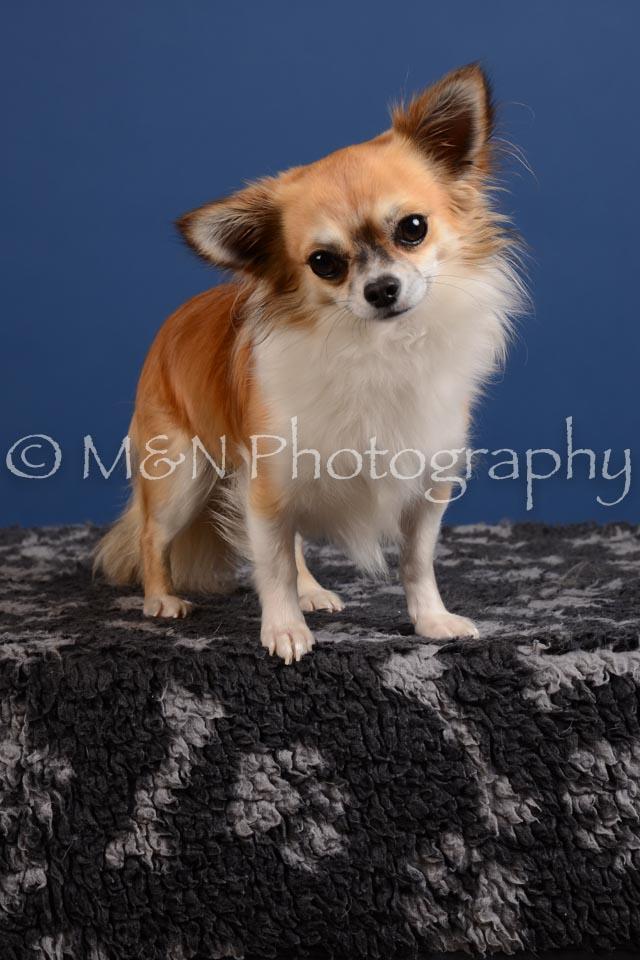 M&N Photography -DSC_4982