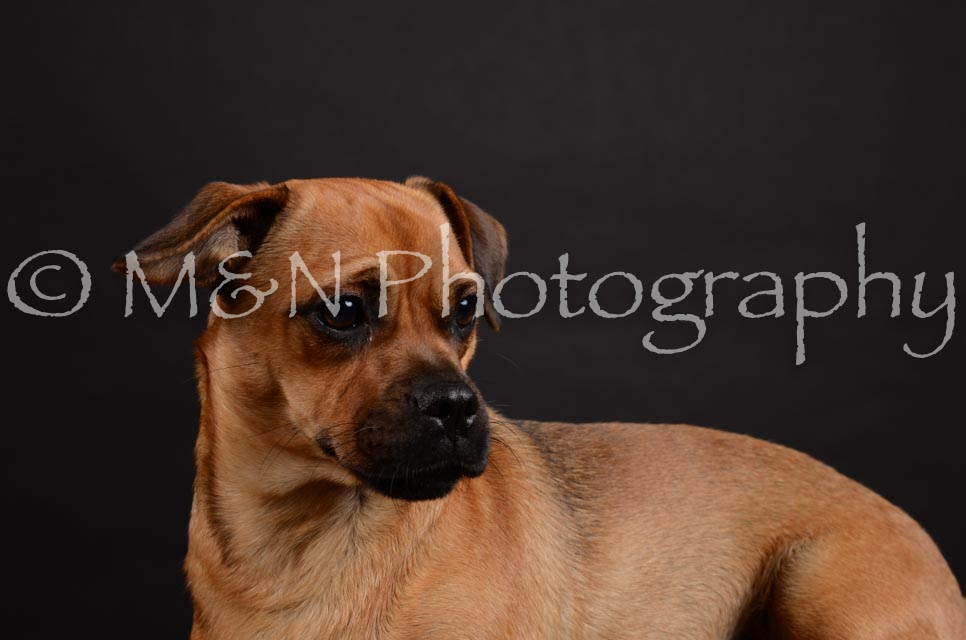 M&N Photography -DSC_5464