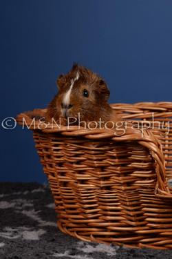 M&N Photography -DSC_5090
