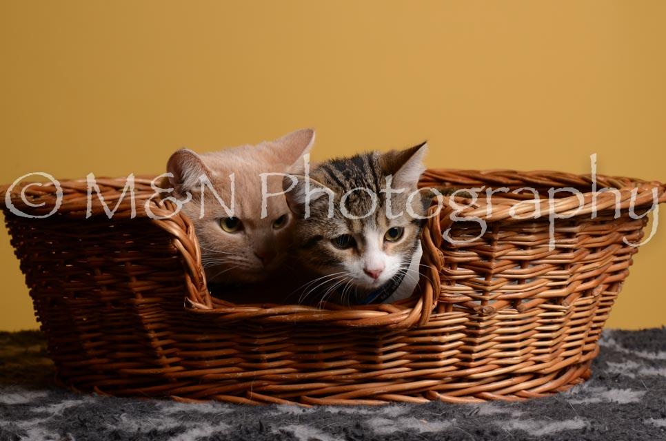M&N Photography -DSC_4812