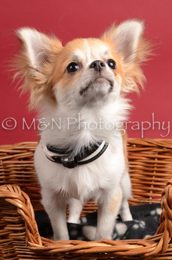 M&N Photography -DSC_8600