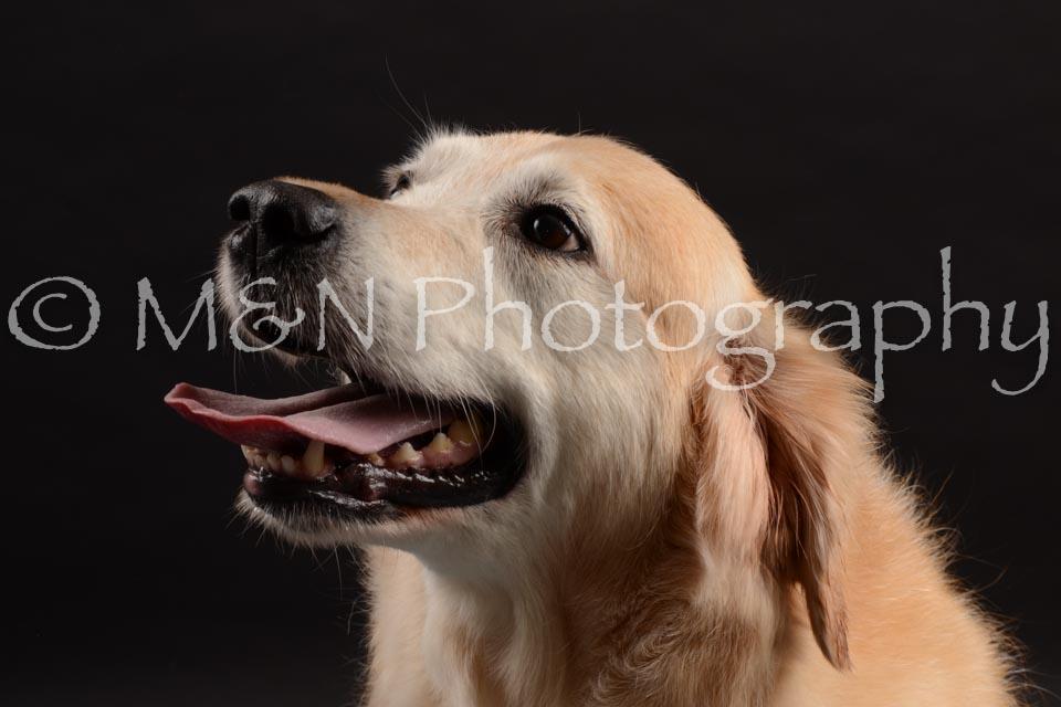 M&N Photography -DSC_9880