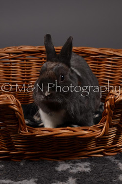 M&N Photography -DSC_2204