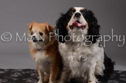 M&N Photography -DSC_2009