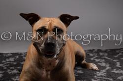 M&N Photography -DSC_1861