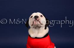 M&N Photography -IMG_4684