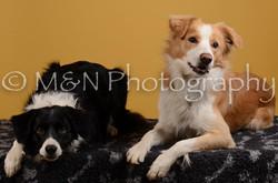 M&N Photography -DSC_4495