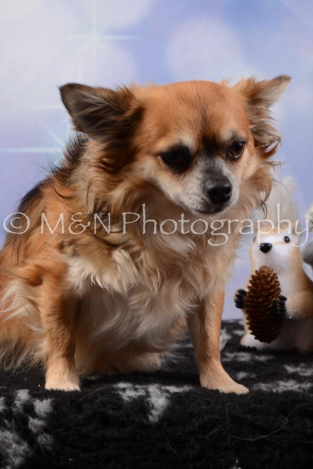 M&N Photography -DSC_6612