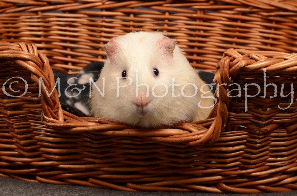 M&N Photography -DSC_4684