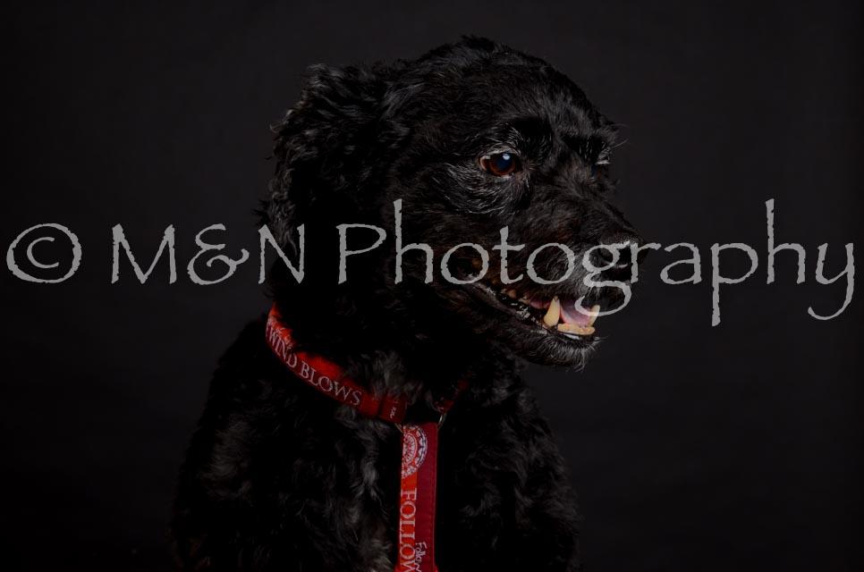 M&N Photography -DSC_5658