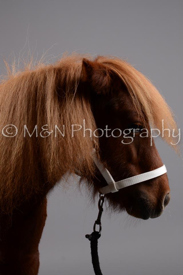 M&N Photography -DSC_2458