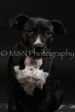 M&N Photography -DSC_2653