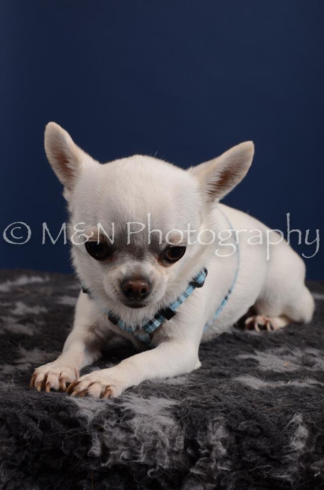 M&N Photography -DSC_3950