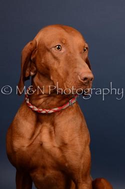 M&N Photography -DSC_4538