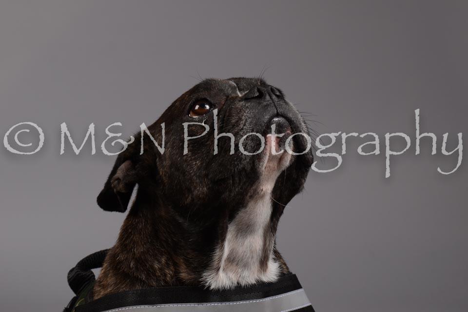 M&N Photography -DSC_1899