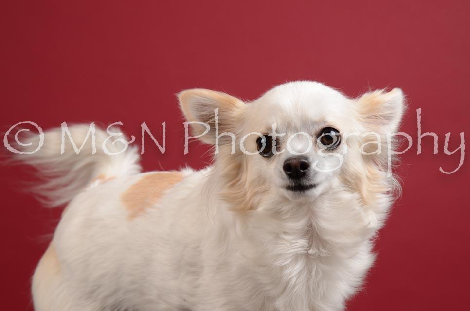 M&N Photography -DSC_3694