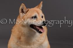 M&N Photography -DSC_2071