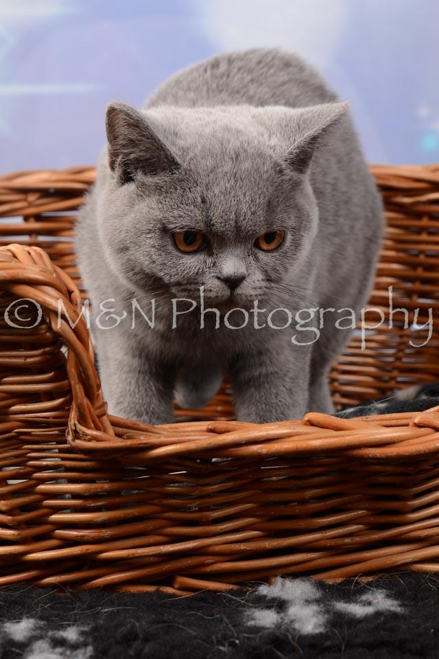 M&N Photography -DSC_7020