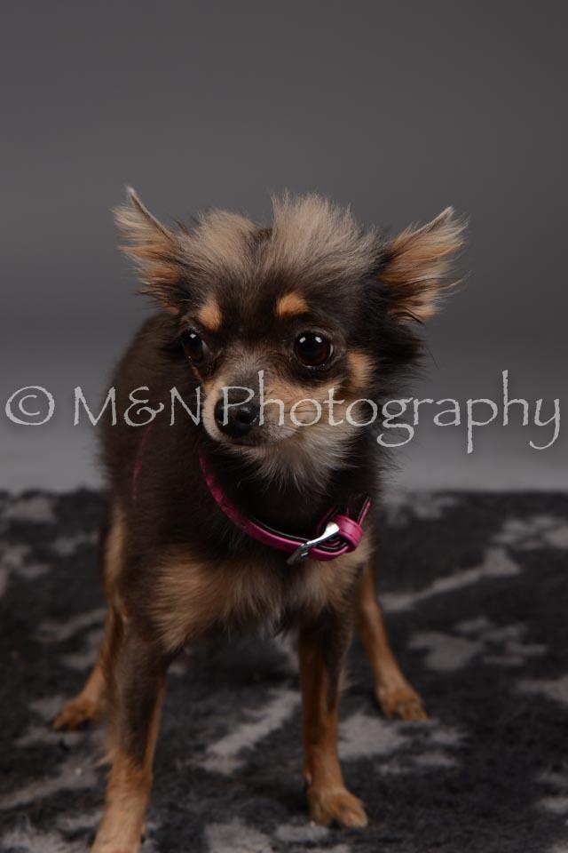 M&N Photography -DSC_2243