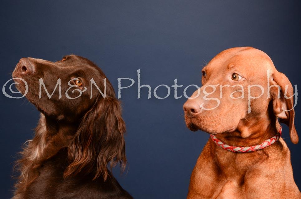 M&N Photography -DSC_4542