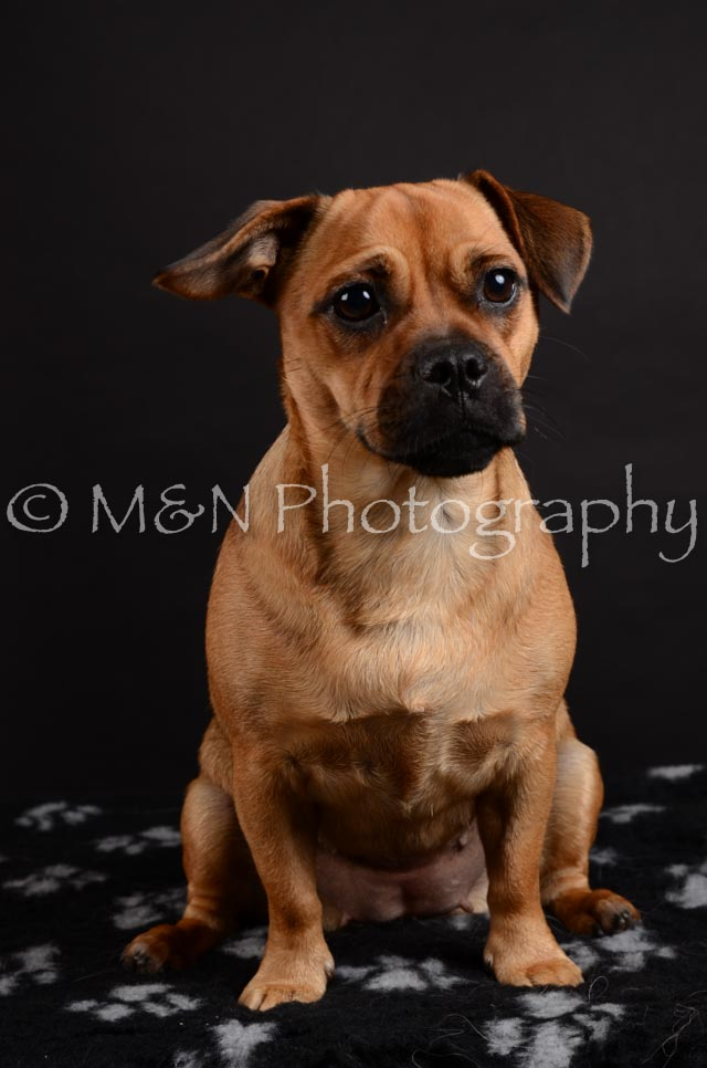 M&N Photography -DSC_5460