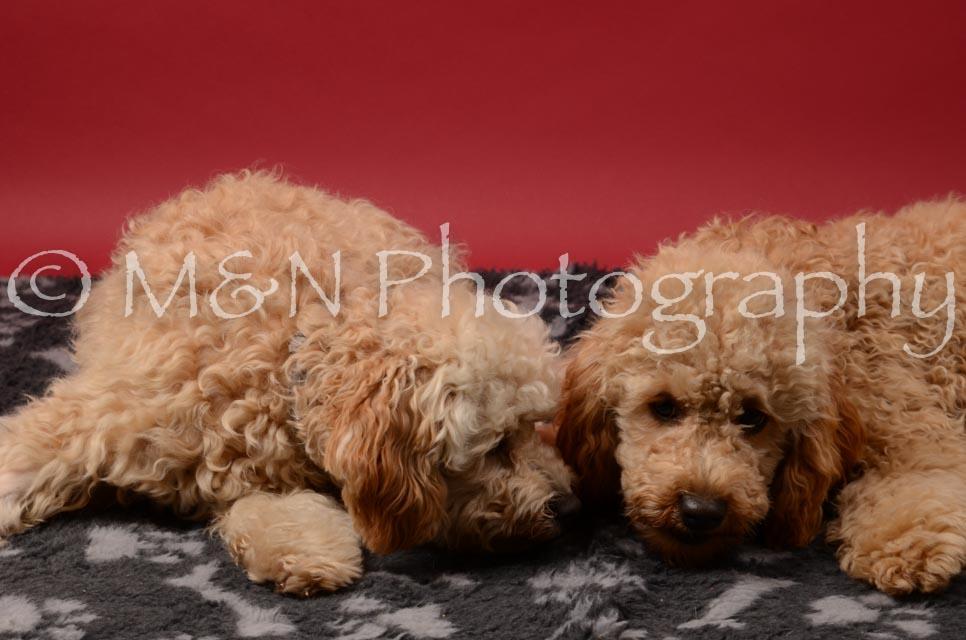 M&N Photography -DSC_6714