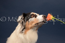 M&N Photography -DSC_3989