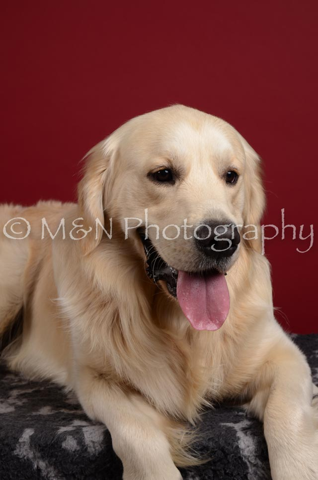 M&N Photography -DSC_3719