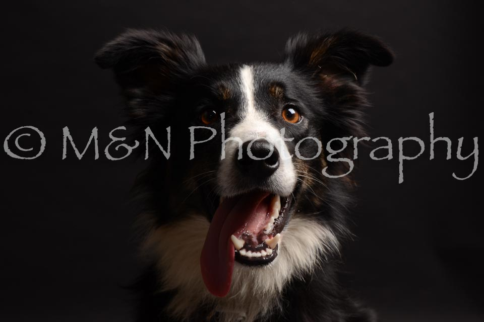 M&N Photography -DSC_9934