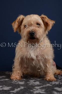 M&N Photography -DSC_3853