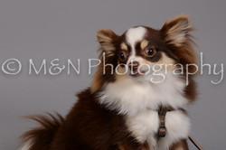 M&N Photography -DSC_2490
