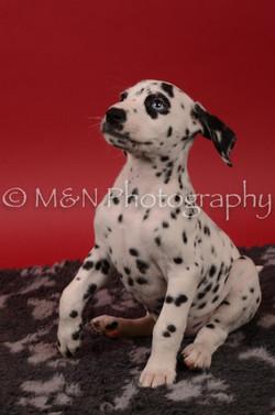 M&N Photography -DSC_6802
