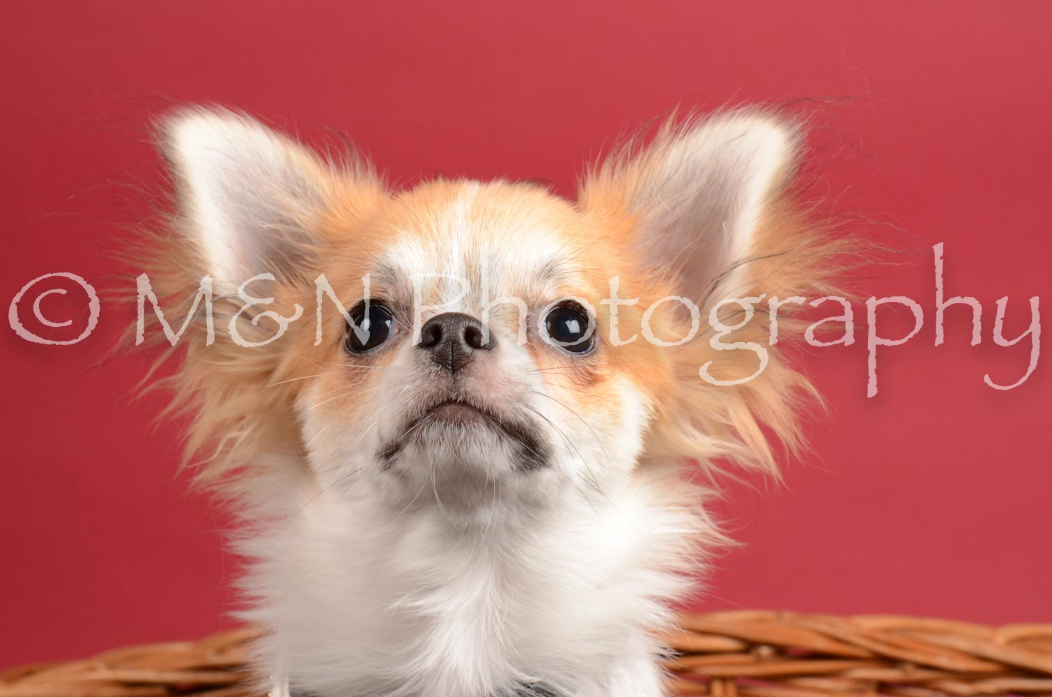 M&N Photography -DSC_8602