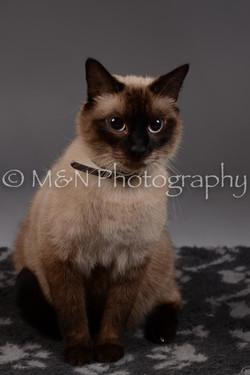 M&N Photography -DSC_2257