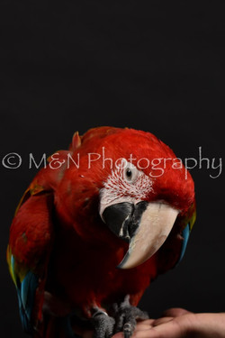 M&N Photography -DSC_2691