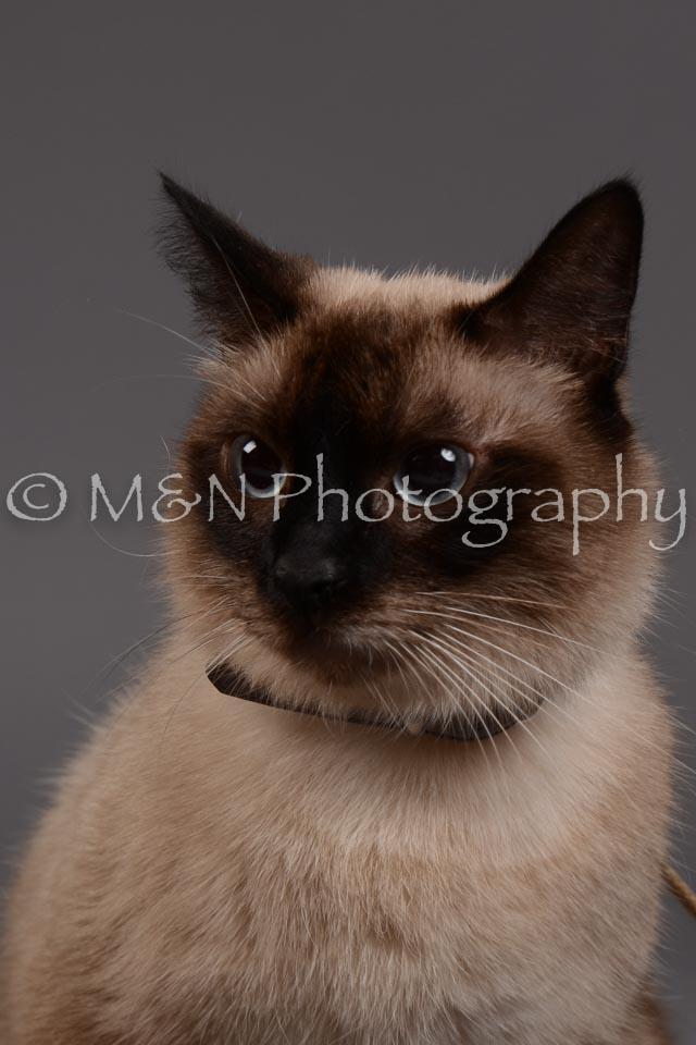 M&N Photography -DSC_2258
