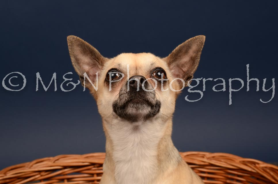 M&N Photography -DSC_4561