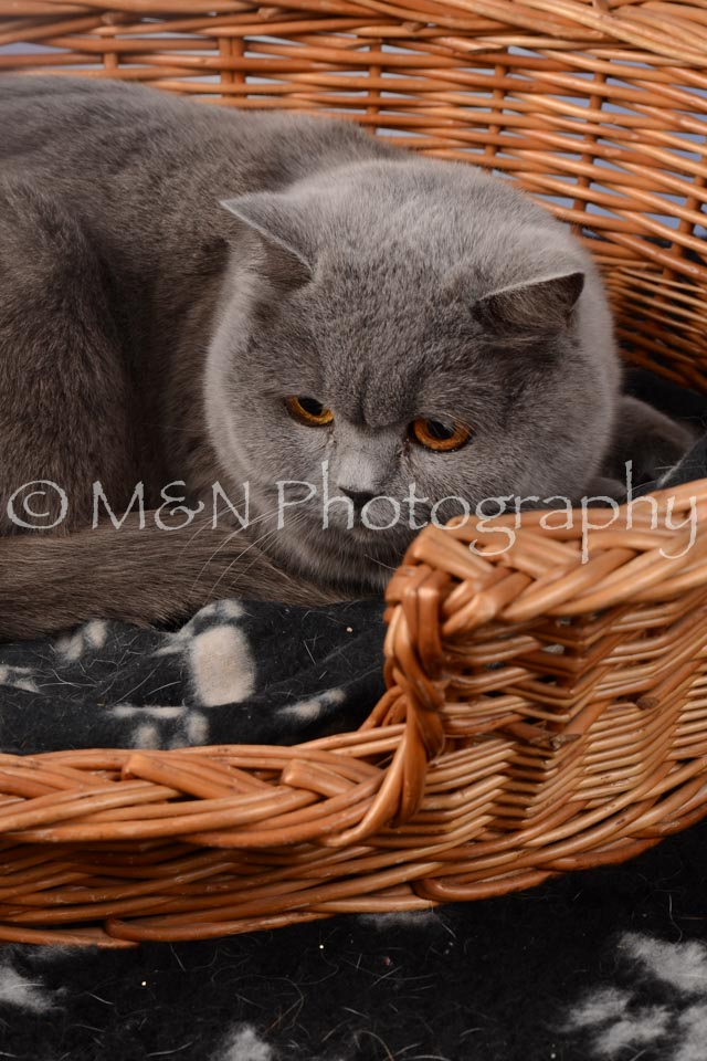 M&N Photography -DSC_6841