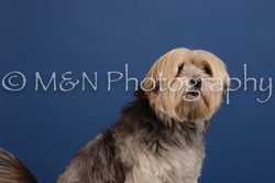 M&N Photography -DSC_4940