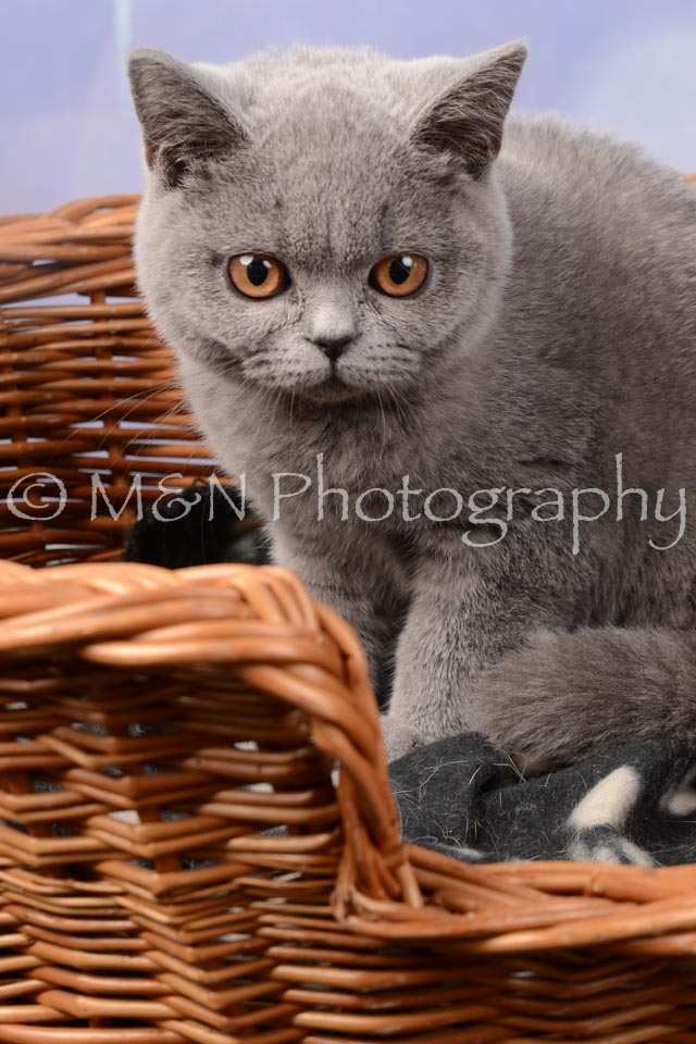 M&N Photography -DSC_7014