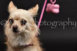 M&N Photography -DSC_2369