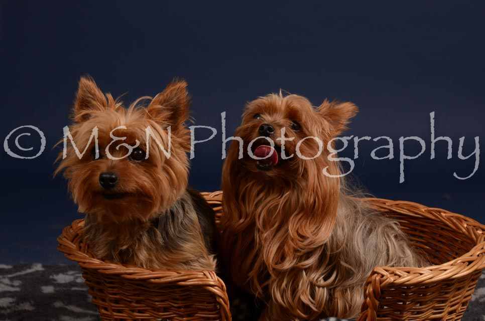 M&N Photography -DSC_0432