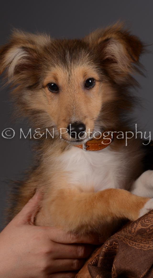 M&N Photography -DSC_2290