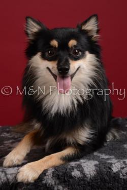 M&N Photography -DSC_3206