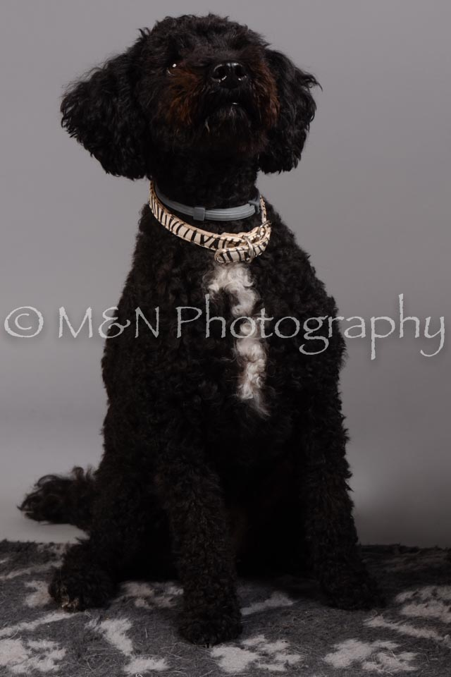 M&N Photography -DSC_2404