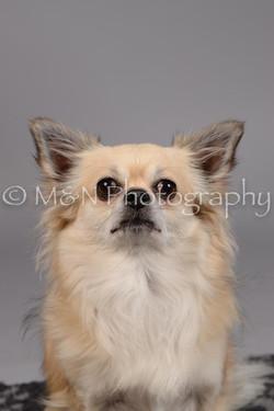M&N Photography -DSC_1810