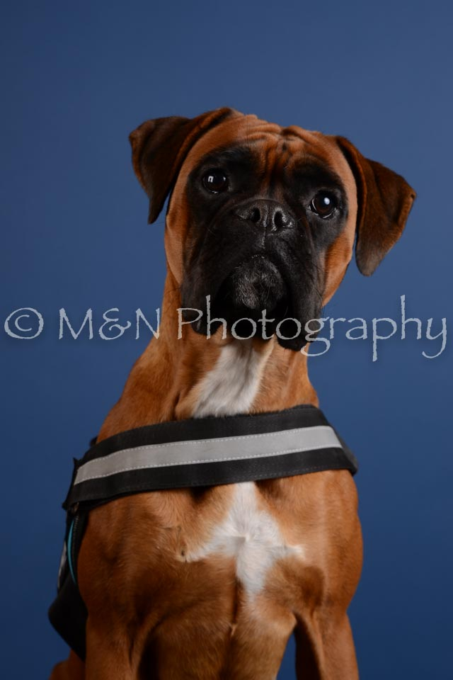 M&N Photography -DSC_5247