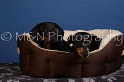 M&N Photography -DSC_5366