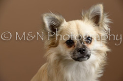 M&N Photography -_SNB0482