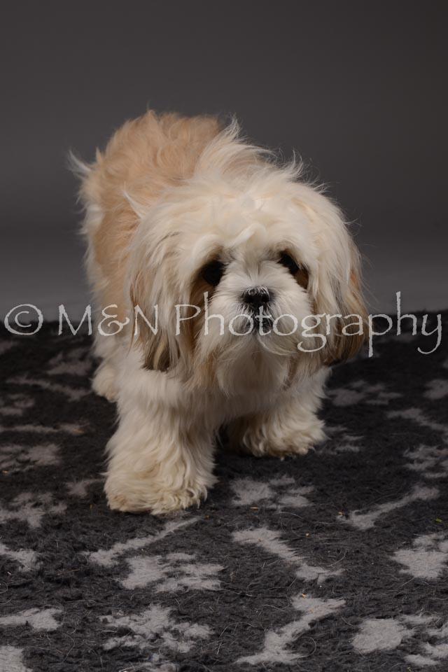 M&N Photography -DSC_2041